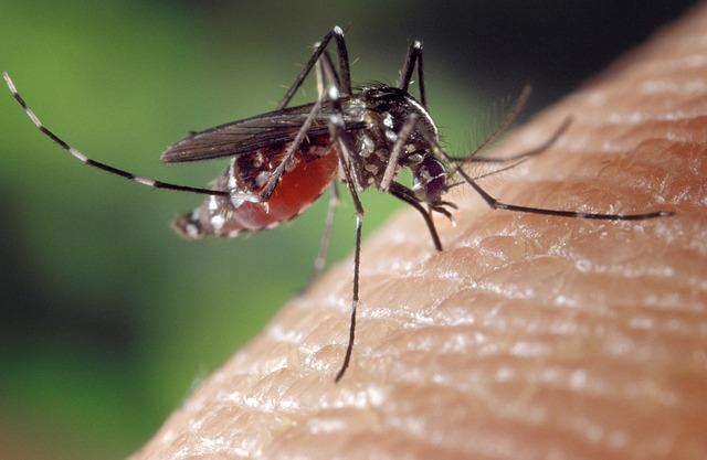 komaraca